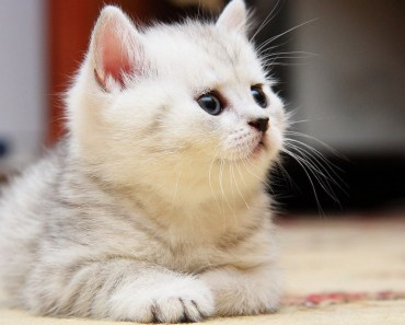 Funny and Cute Fluffy Kittens Compilation - funny and cute fluffy kittens compilation