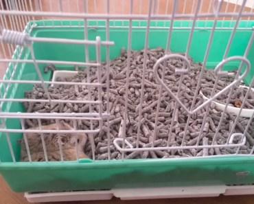 Funny hamster 345(3) - funny hamster 3453
