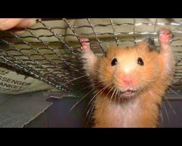 Funny Hamster Compilation NEW - funny hamster compilation new