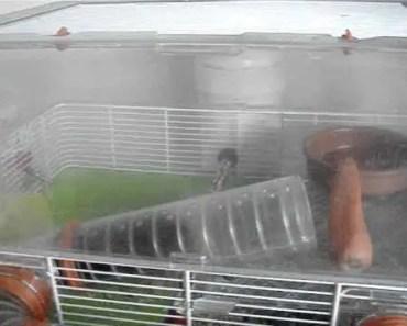 funny hamster eating carrot - funny hamster eating carrot