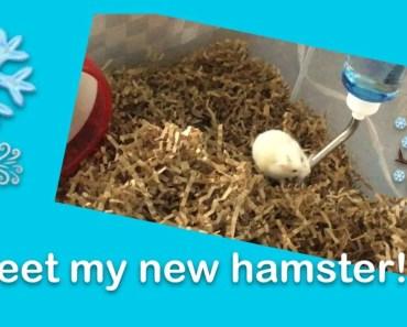 Furry Friday Meet My Winter White Hamster - furry friday meet my winter white hamster
