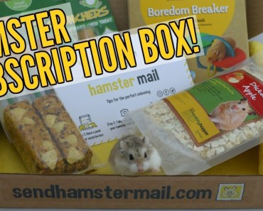 HAMSTER MAIL UNBOXING | Hamster subscription box - hamster mail unboxing hamster subscription