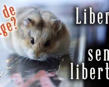 Hamster : peut-il vivre en liberté ou en semi-liberté? - hamster peut il vivre en liberte ou en semi liberte