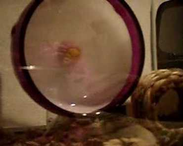 Hamster Wheel Fun - hamster wheel fun