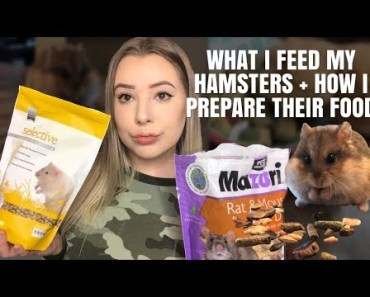 MY HAMSTER DIET! What I feed + How I Prepare it - my hamster diet what i feed how i prepare it