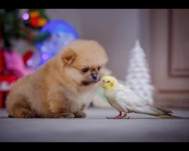 PARROTS Trying To Befriend PUPPIES - Cute Puppy And Funny Parrot Videos Compilation 2018 [BEST OF] - parrots trying to befriend puppies cute puppy and funny parrot videos compilation 2018 best of