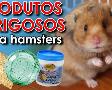 Produtos inapropriados para hamsters - produtos inapropriados para hamsters
