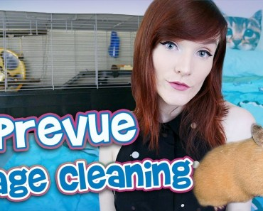 Syrian Hamster Cage Cleaning   Prevue 528 Small Animal Cage - syrian hamster cage cleaning prevue 528 small animal cage