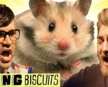 The Secret Life of a Hamster Song - the secret life of a hamster song