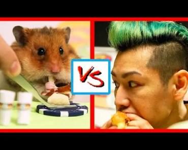 TINY HAMSTER Eats Hot Dogs VS KOBAYASHI! | What's Trending Now! - tiny hamster eats hot dogs vs kobayashi whats trending now