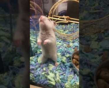 Funny hamster - 1533971576 funny hamster