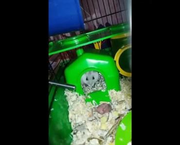 Funny hamster - 1535220371 funny hamster