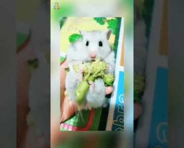 Funniest Hamsters Of All Time Funny Hamster Videos Compilation 2018 - 1535375358 funniest hamsters of all time funny hamster videos compilation 2018