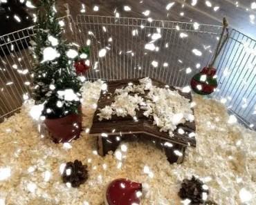 A HAMSTER'S WINTER WONDERLAND - a hamsters winter wonderland