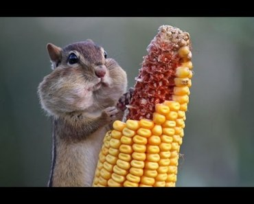 Animals Are So Funny When They Eat - animals are so funny when they eat