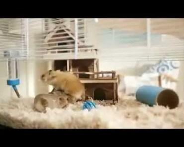 Barclays Hamster Advert - barclays hamster advert