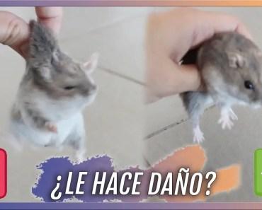 Cómo agarrar a mi hámster | Mi hámster me muerde 2.0 - como agarrar a mi hamster mi hamster me muerde 2 0