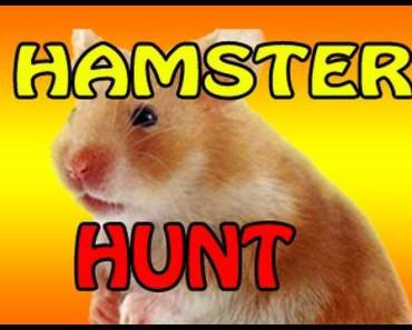 CRAZY Hamster Found In House! - crazy hamster found in house