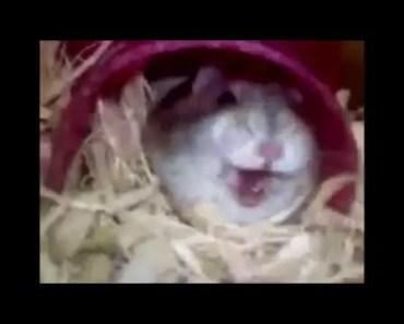 Cute hamster sound (watch till end - Fortnite Edition) - cute hamster sound watch till end fortnite edition