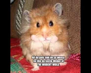 Funny animal pics with captions - funny animal pics with captions