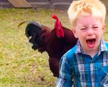 FUNNY BABIES AND CHICKEN BECOME BEST FRIEND #4| Funny Babies and Pets - funny babies and chicken become best friend 4 funny babies and pets