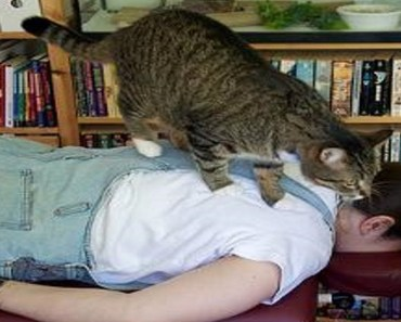 Funny Cats Giving Massage To People! Try Not To Smile! - funny cats giving massage to people try not to smile