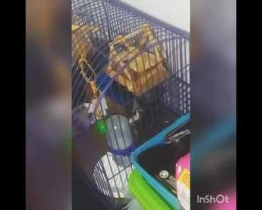 Funny hamster want sunflower seeds - funny hamster want sunflower seeds