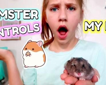 Hamster Controls My Life! - hamster controls my life