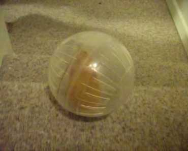 Hamster in ball vs. Stairs - hamster in ball vs stairs