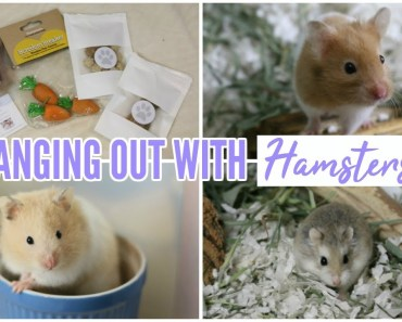 HANGING OUT WITH HAMSTERS & TinyHamsterPaws package! - hanging out with hamsters tinyhamsterpaws package