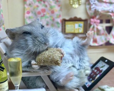 Happy hamster relaxing on a chair - Cute and funny videos of hamsters - happy hamster relaxing on a chair cute and funny videos of hamsters