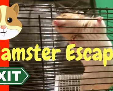 Humphrey Hamster Escape From Cage - Surprise ending - humphrey hamster escape from cage surprise ending
