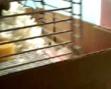My hamster's funny eating - my hamsters funny eating