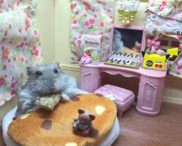 Tiny hamster eating breakfast in bed - Cute and humorous motion pictures of hamsters - tiny hamster eating breakfast in bed cute and humorous motion pictures of hamsters