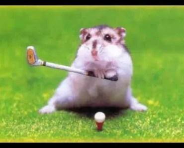 Vtipný křeček (funny hamster) - vtipny krecek funny hamster
