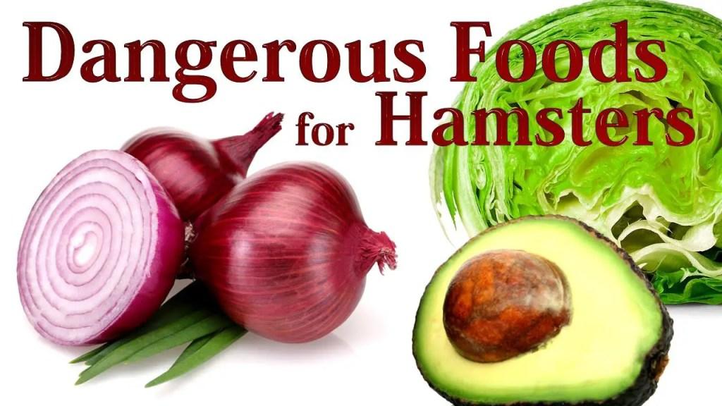 Top 14+ Dangerous Foods For Hamsters