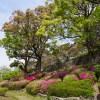 牡丹・つつじ 舞鶴公園(2019年4月16日)