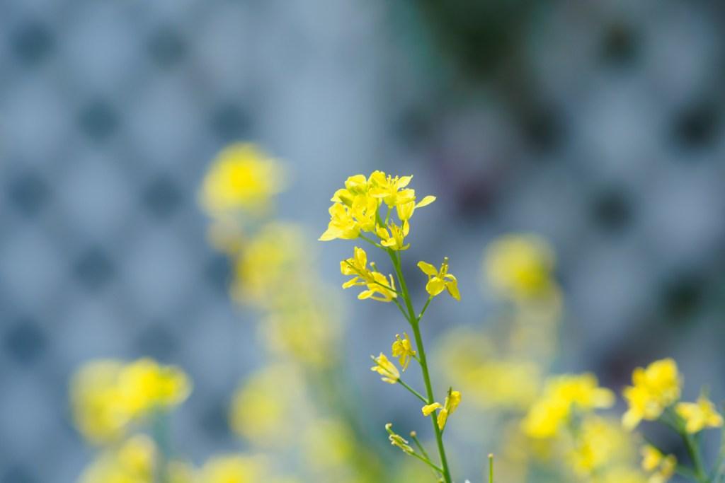 季節の花の写真