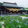 菖蒲 宮地嶽神社(2019年6月3日)