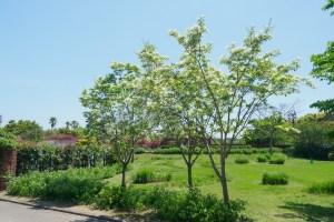 海の中道海浜公園の新緑の写真