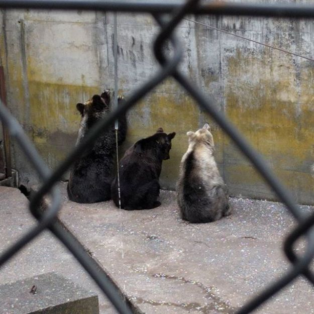クマさんに会いに来たよ。@芦野公園
