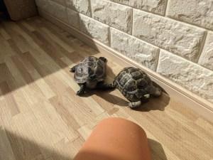 todays-tortoise-2021-09-17
