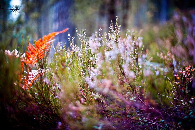 秋の花、autumn-flower