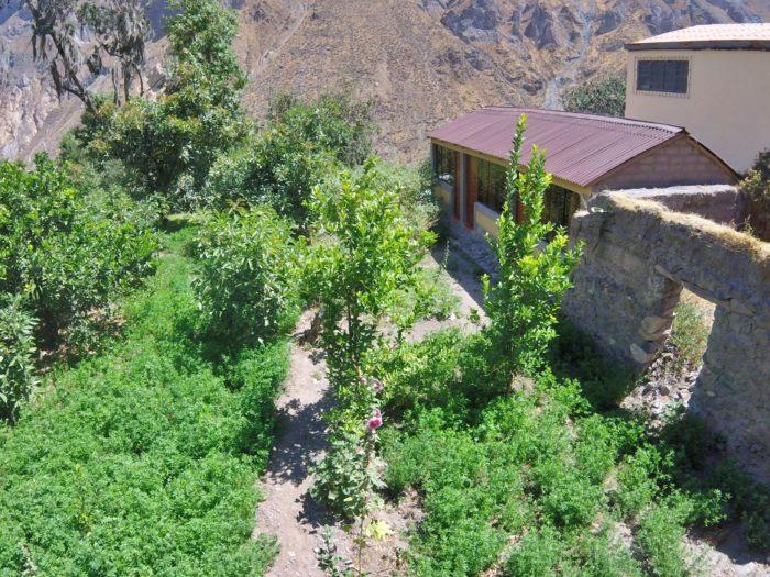 緑に囲まれた小屋
