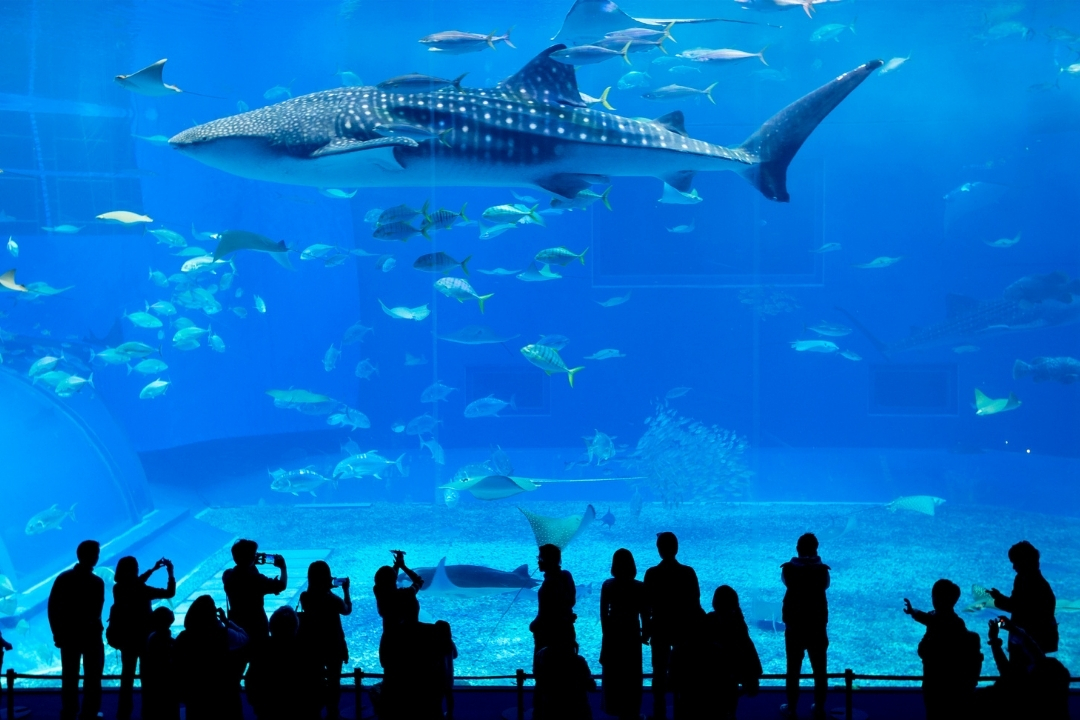 Oceanarium in Okinawa (Canva)