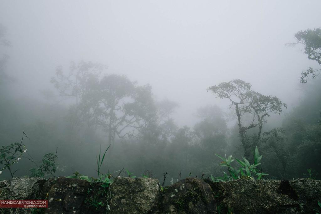 misty cloud forest macchu picchu peru