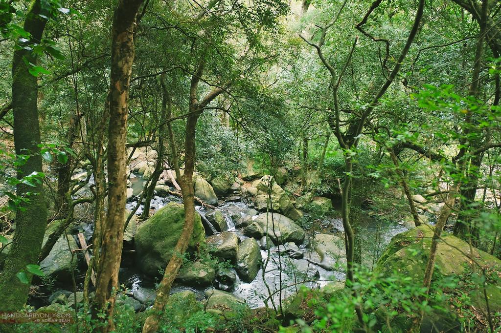 lush forest stream