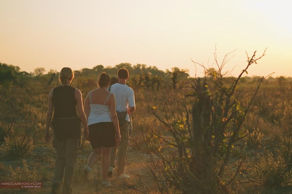 evening bush walk okavango delta