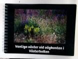 Liten flora