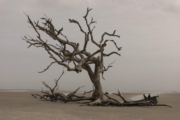 photo d'un arbre isolé et mort dans le désert